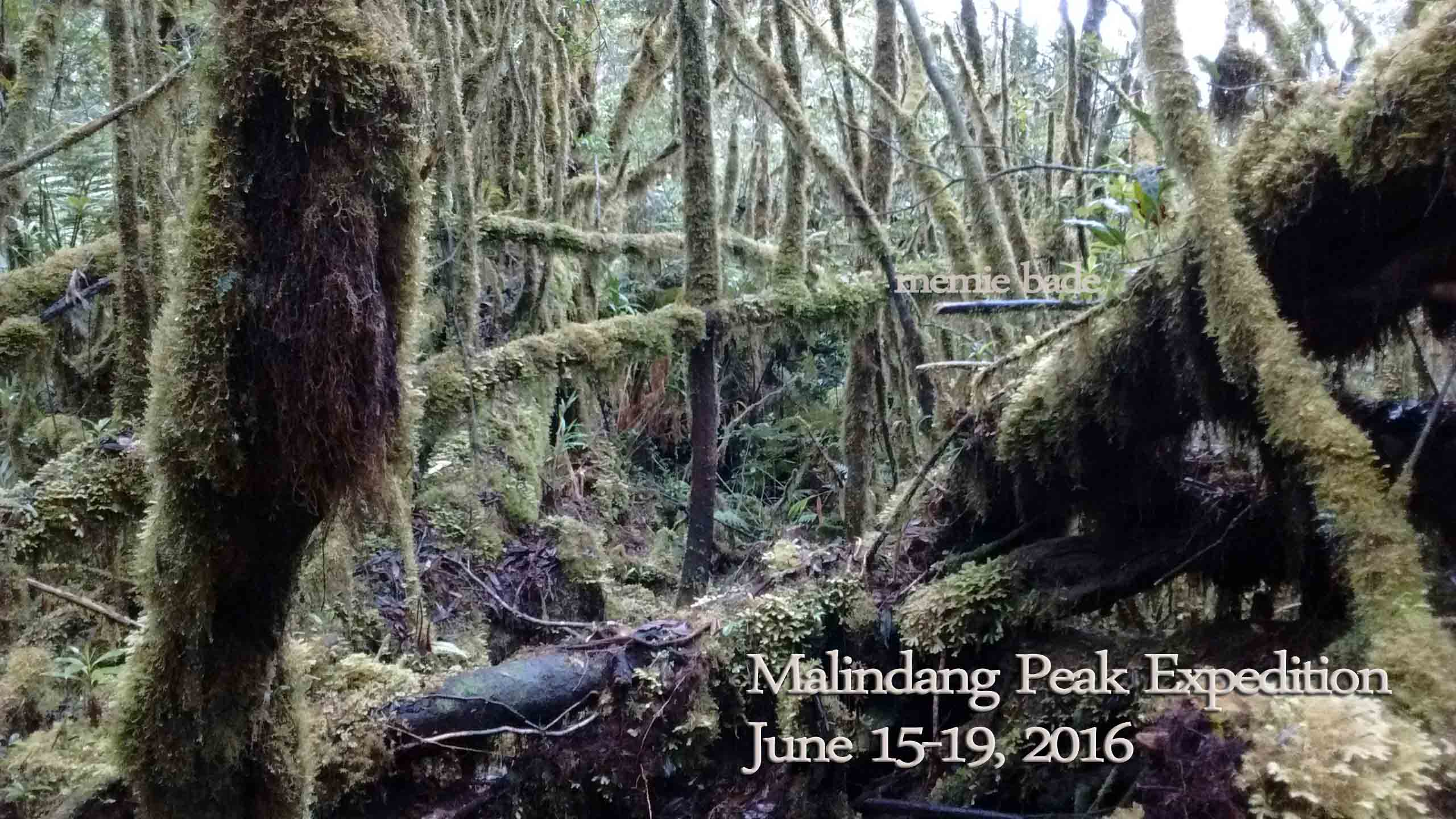 thephotos/2016/malindang peak expedition/IMG_20160618_085753857.jpg